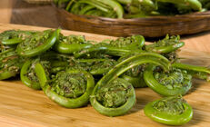 Fiddleheads (Fiddlehead Ferns)