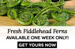 Shop Fiddlehead Ferns