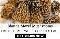 Buy Blonde Morel Mushrooms