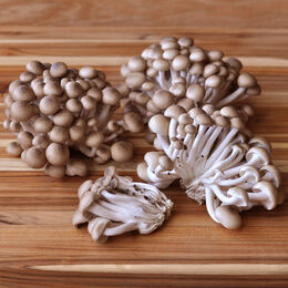 Organic Hon-Shimeji Mushrooms