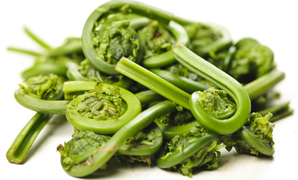 Seasonal Greens: Fiddlehead Ferns- Our Products – Dartagnan.com