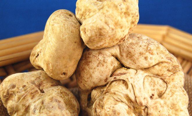 White Truffles - Our Products – Dartagnan.com