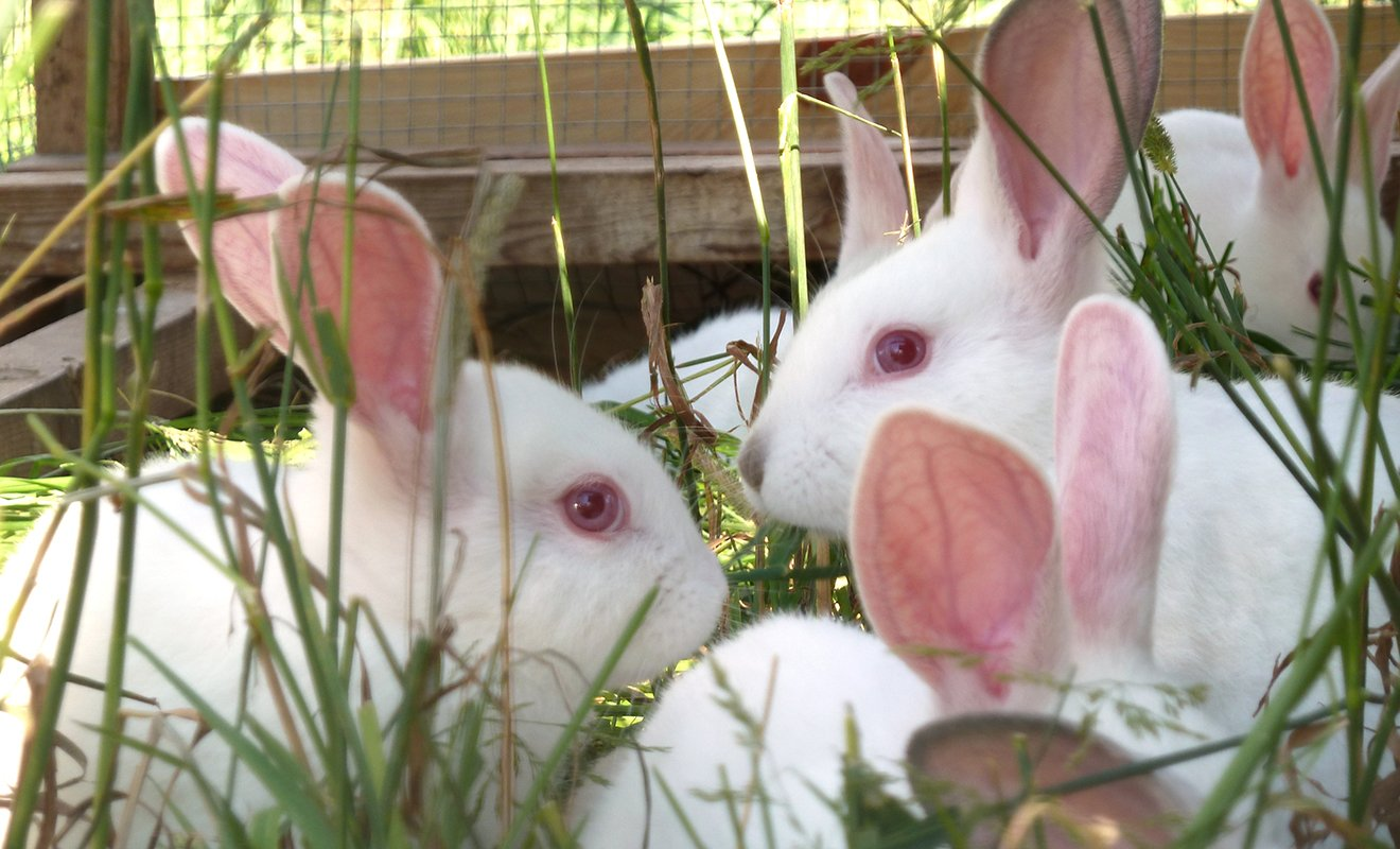 Rabbit: The Basics - Our Products – Dartagnan.com