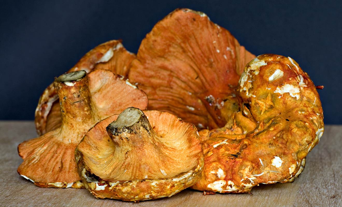 More About Lobster Mushrooms - Our Products – Dartagnan.com