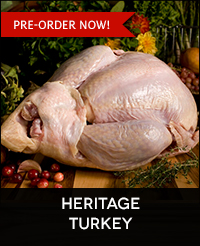 Buy Heritage Breed Turkey Online