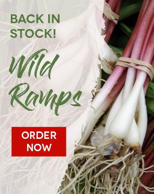 Wild Ramps Back in Stock